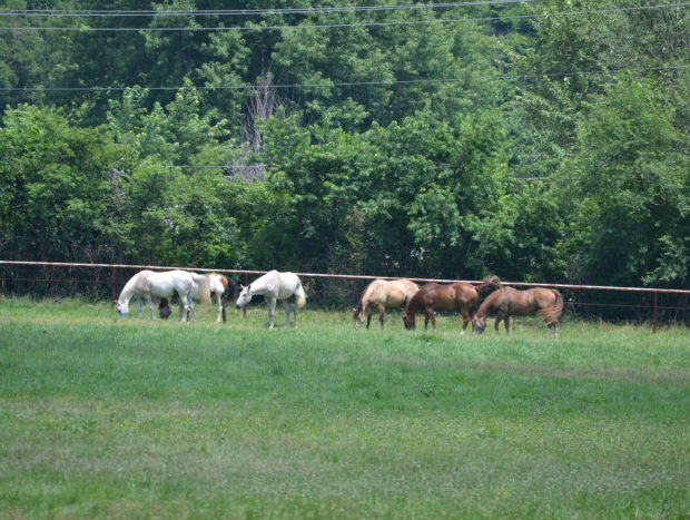 Pasture Boarding is limited to 6 mares and 6 geldings